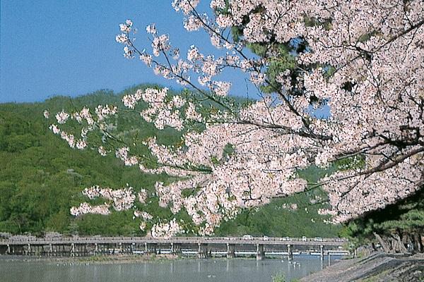 [宿泊]京都 嵐山散策&世界遺産 姫路城 湯郷温泉