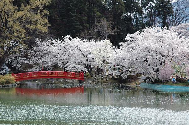 [宿泊]日本のさくら名所100選 臥竜公園さくらまつり あてま温泉