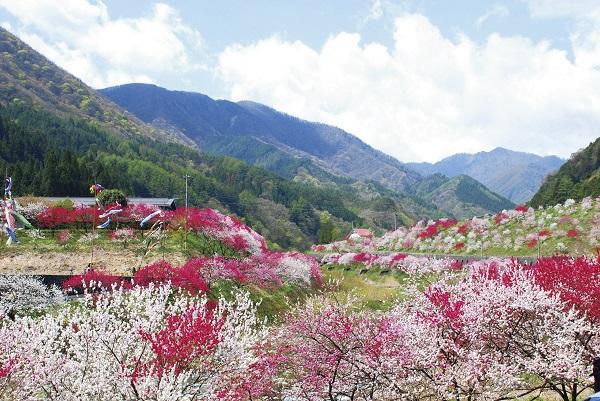 [日帰り]富士見台高原の水芭蕉と阿智村の花桃