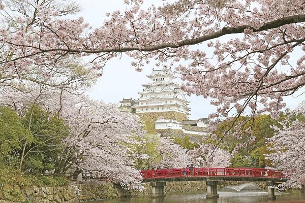 [日帰り]桜の名所 世界遺産 姫路城