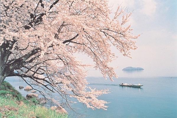 [日帰り]貸切船でゆったりお花見!<br>海津大崎の桜