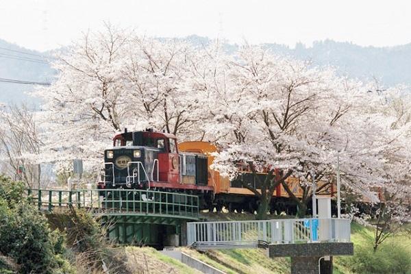 [日帰り]嵯峨野トロッコ列車と京都 大河ドラマ館