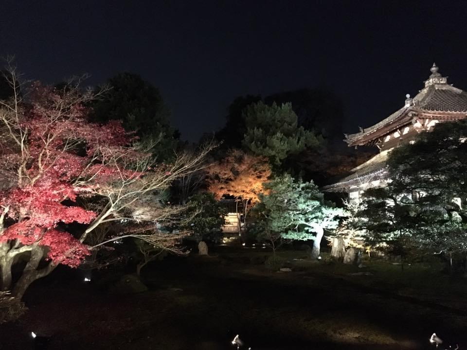[日帰り]醍醐寺 艶やかな紅葉に染まる林泉と鹿王院 夜間特別拝観【Go to トラベル対象】