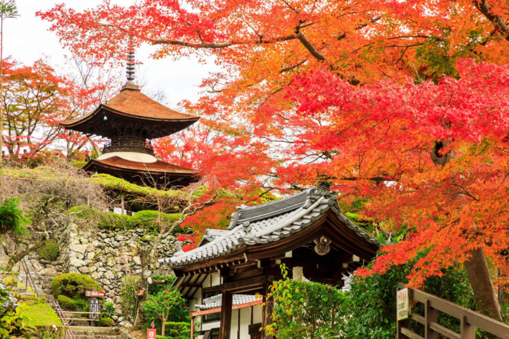 [日帰り]真っ赤な紅葉に燃える 光明寺と山を彩るダイナミックな紅葉 善峯寺【Go to トラベル対象】