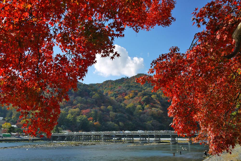 [日帰り]嵐山&宇治 ぶらりお散歩【Go to トラベル対象】