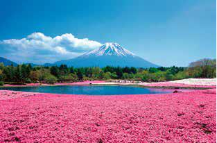[宿泊]春を満喫♪富士芝桜まつり 石和温泉【2ポイント】